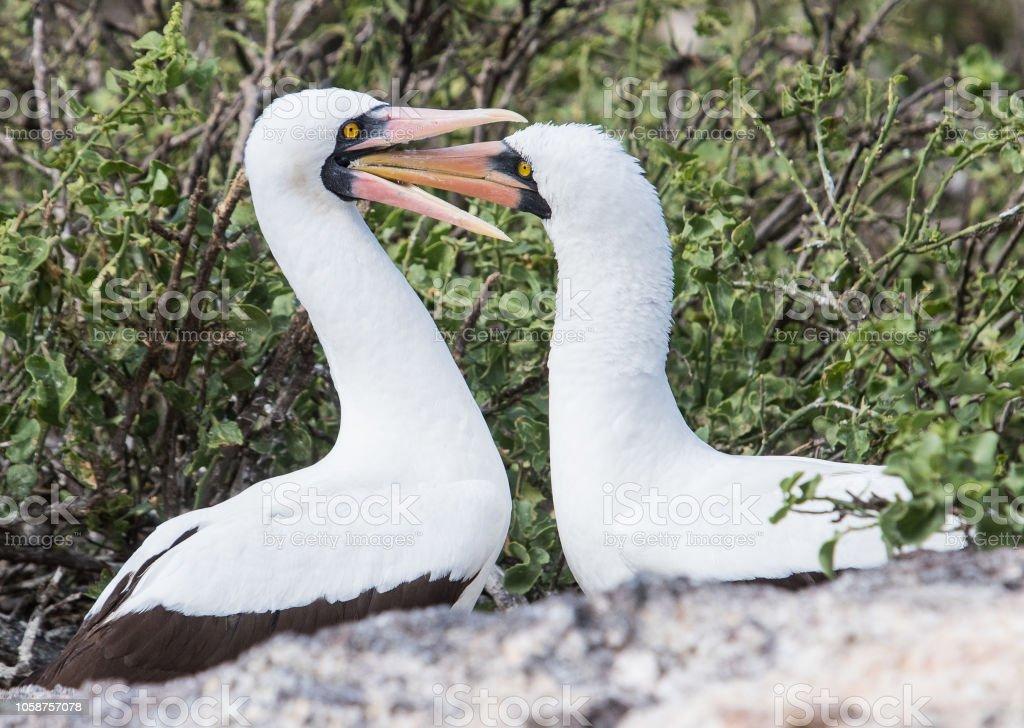 Islas Galápagos - mayo de 2018 - foto de stock
