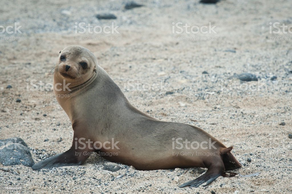 galapagos royalty-free stock photo