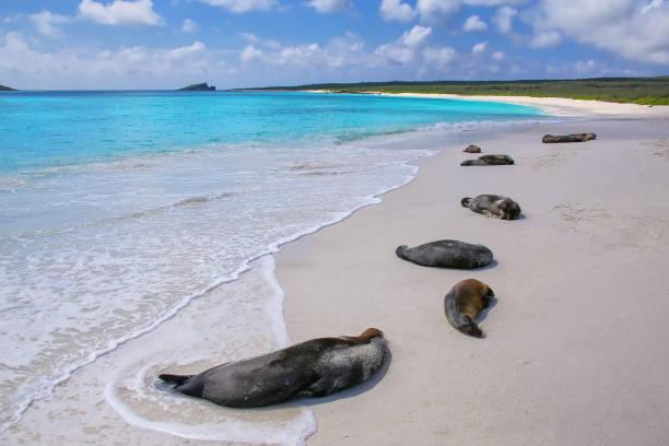 Galapagos-Seelöwen ruht in Galapagos Nationalpark – Foto