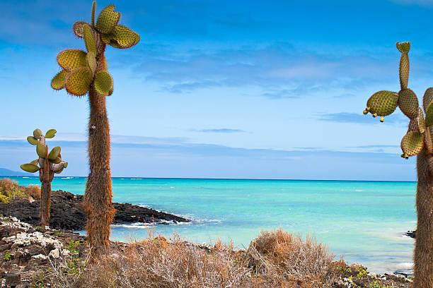 Galapagos sea view stock photo