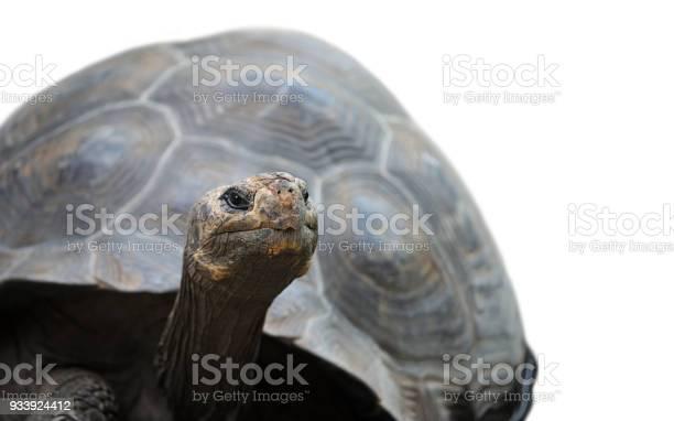 Galapagos tortoise picture id933924412?b=1&k=6&m=933924412&s=612x612&h=iarg5xxtyfzvellor85ldoyyaoez5hdheqpjuiu0ze4=