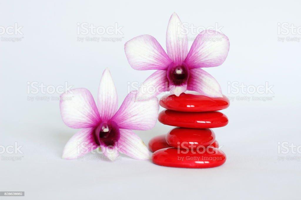 galets rouge disposés en mode de vie zen avec une orchidée bicolore sur le coté gauche et une sur les galets sur fond blanc stock photo