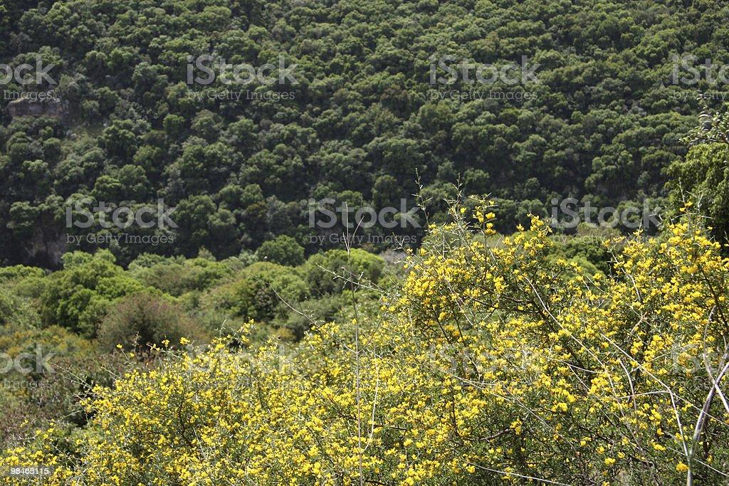 Galilee spring royalty-free stock photo