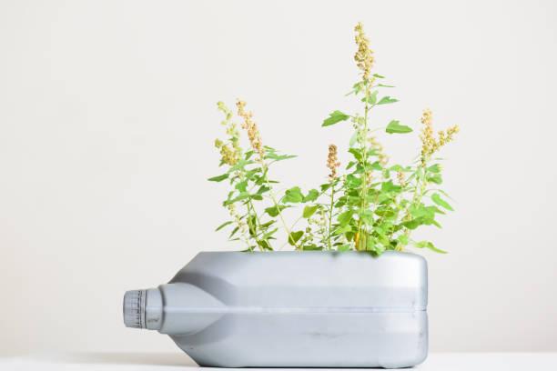 Gallone ÖlKanister Behälter DIY für die Pflanzung Gemüse – Foto