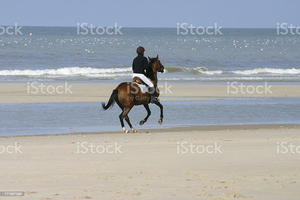 Gallop on the beach royalty-free stock photo