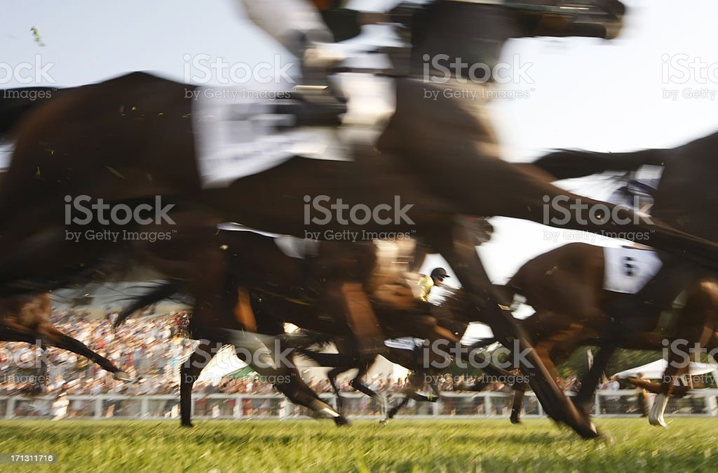 Gallop race stock photo