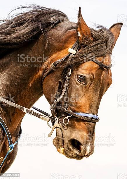 Galloping horse portrait picture id534853089?b=1&k=6&m=534853089&s=612x612&h=mhdva887qzbgce9zzx0dee vdd1bkm0nwax u1dy9do=