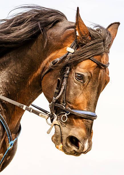 Galloping horse portrait picture id534853089?b=1&k=6&m=534853089&s=612x612&w=0&h=hnba5gb kmt0gy1nolmdewiyrpezri l7iaxbyje ye=