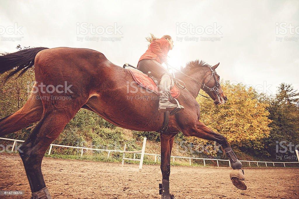 Galloping horse with female jockey stock photo