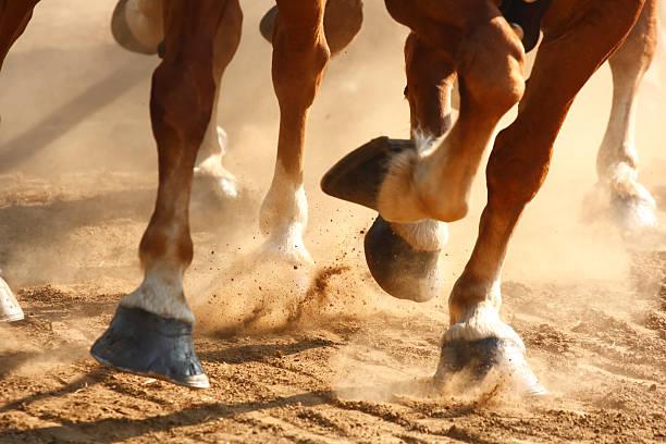 Galloping horses hooves picture id98274654?b=1&k=6&m=98274654&s=612x612&w=0&h=qvjbrgndjk7lxeah m8juo33p3vs3abw  pvzerheu4=