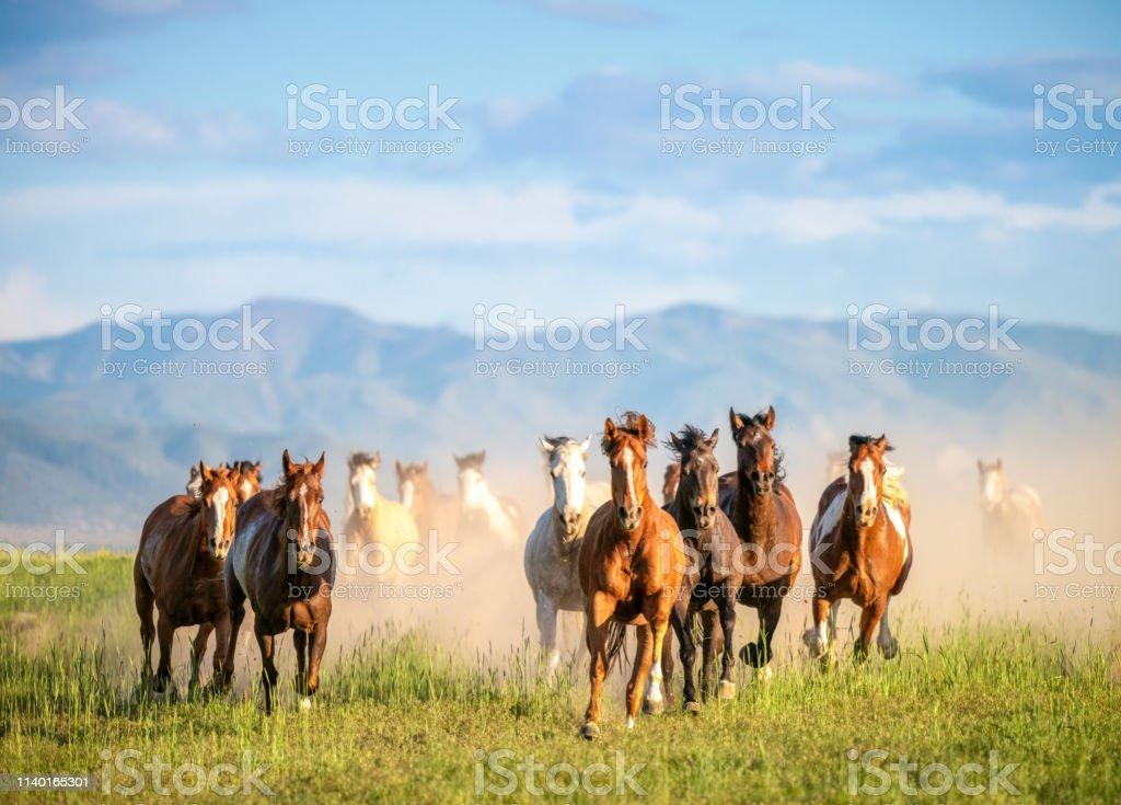 在荒野中疾馳而過的野馬 - 免版稅一群動物圖庫照片