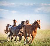 istock Galloping wild horses 1290560472