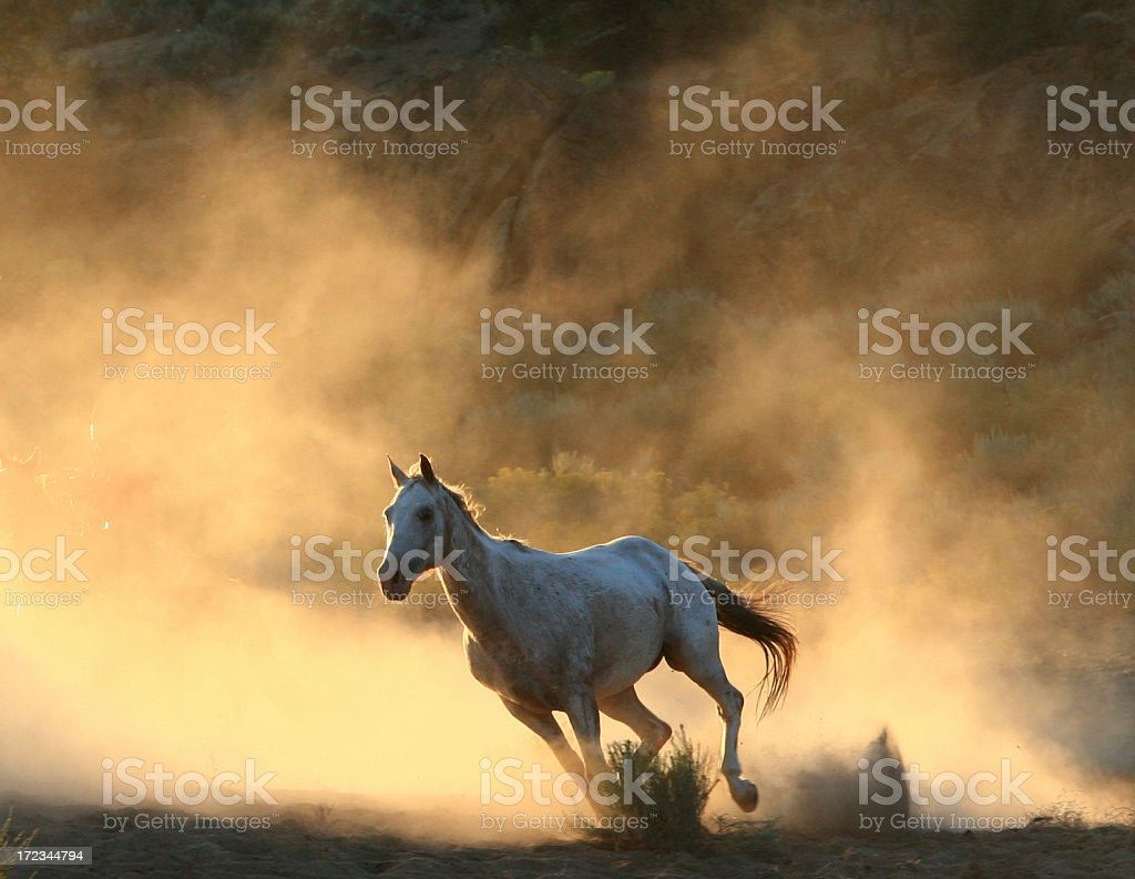 Galloping,Wild horse against sunrise dust cloud stock photo