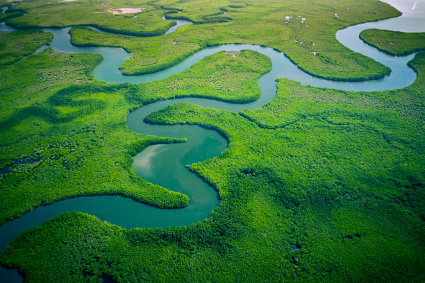 Gambia Mangroves. Aerial view of mangrove forest in Gambia. Photo made by drone from above. Africa Natural Landscape. Gambia Mangroves. Aerial view of mangrove forest in Gambia. Photo made by drone from above. Africa Natural Landscape. drone point of view stock pictures, royalty-free photos & images