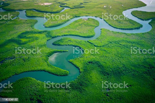 Photo of Gambia Mangroves. Aerial view of mangrove forest in Gambia. Photo made by drone from above. Africa Natural Landscape.