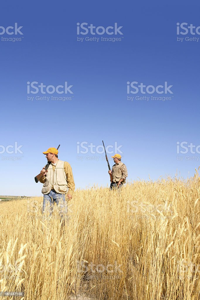 game bird hunting stock photo