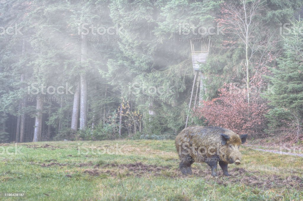 Game damage from wild boar - Royalty-free Agricultural Field Stock Photo