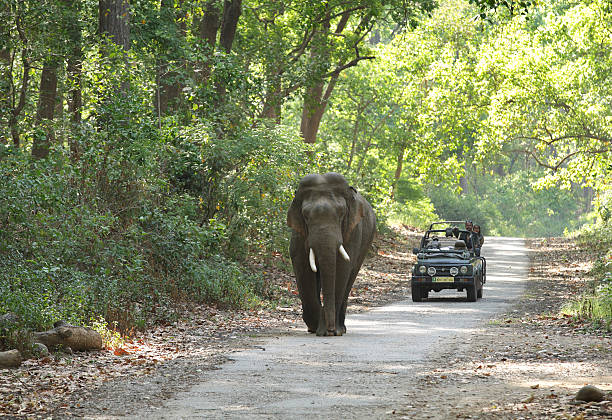 Game drive at Jim Corbett forest stock photo