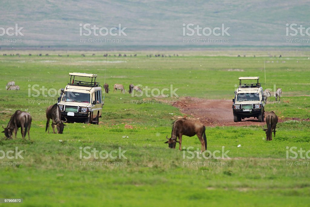 Game drive royalty free stockfoto