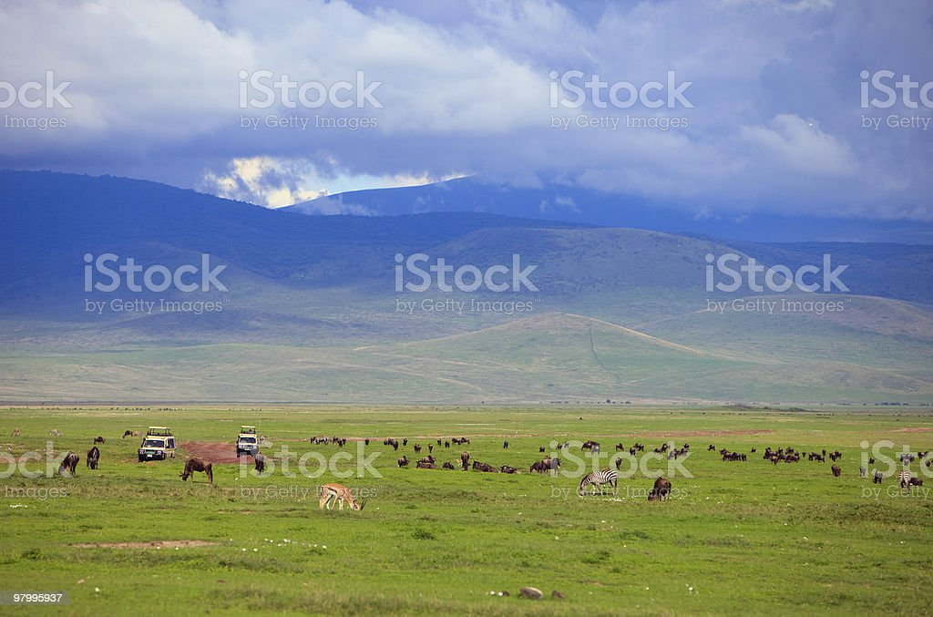 Game drive royalty-free stock photo