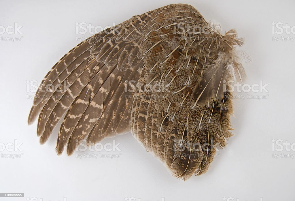 Gamebird Feathers royalty-free stock photo