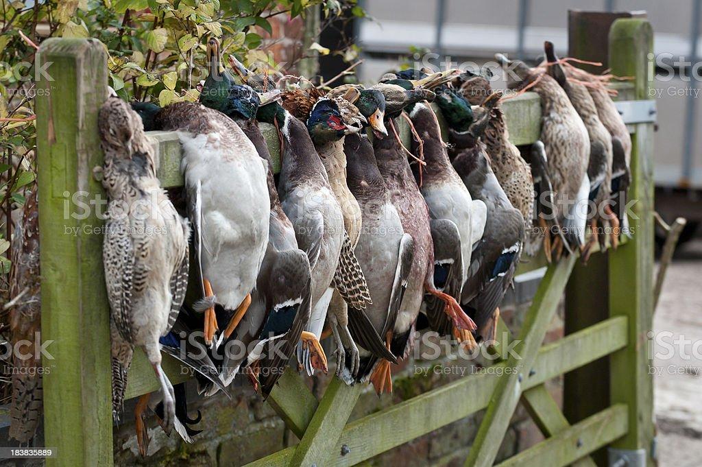 gamebirds royalty-free stock photo