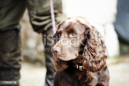 A Gamekeeper standing with his Springer Spaniel, Devon, UK