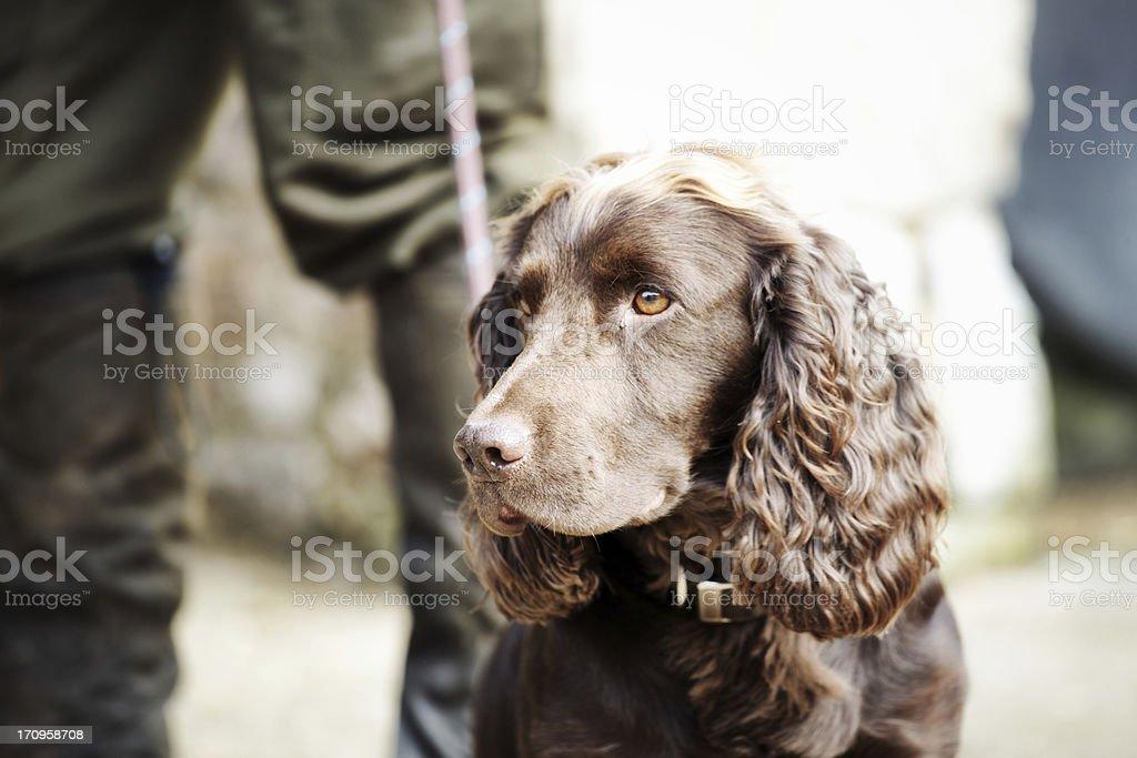 Gamekeeper standing with his gundog stock photo