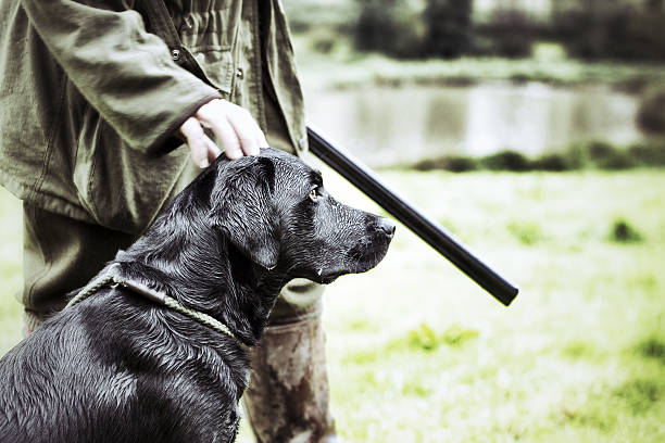 Gamekeeper  with his dog A Gamekeeper standing with his Black Labrador, Devon, UK hunting dog stock pictures, royalty-free photos & images