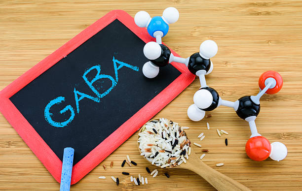 gamma-aminobutyric acid (gaba) in germinated rice - acid stock pictures, royalty-free photos & images