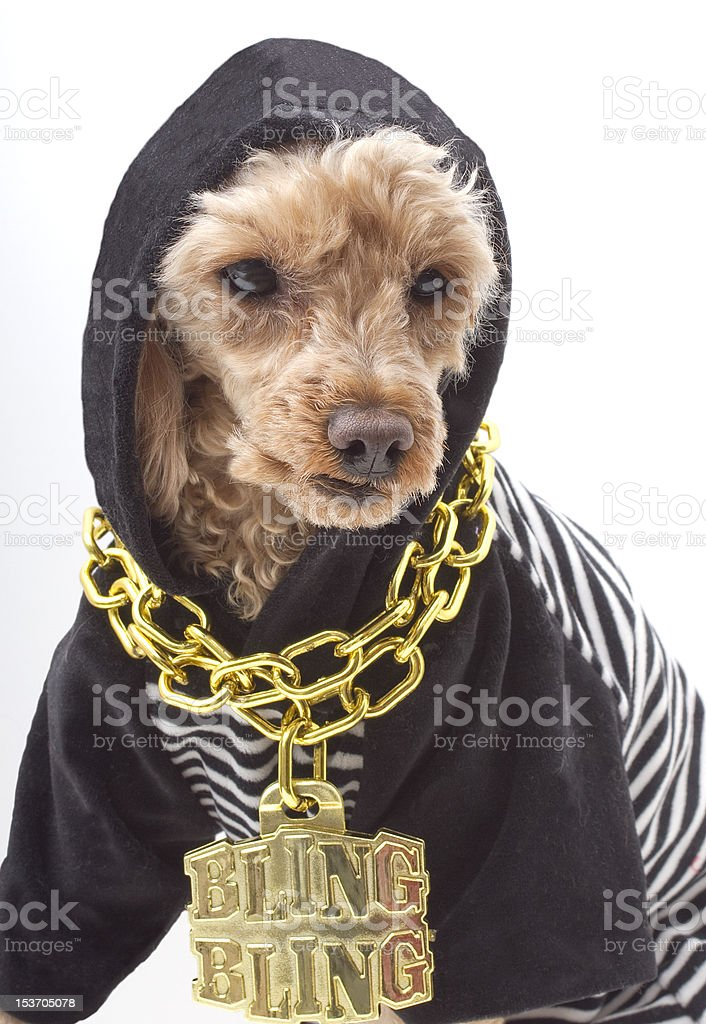Gangsta Dog stock photo
