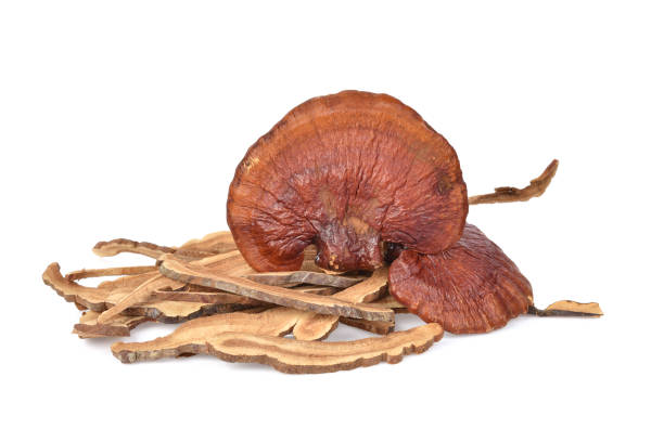ganoderma lucidum isolated on white background - cogumelos imagens e fotografias de stock