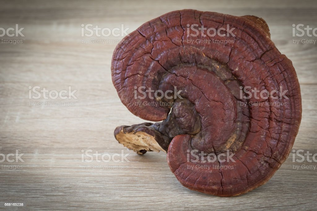 Ganoderma Lucidum Mushroom on wood background stock photo