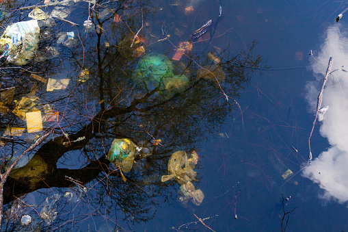 Garbage and tree reflections in water