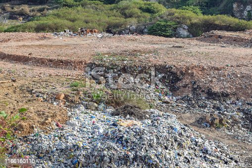 a garbage dump and some animals seen in Sri Lanka