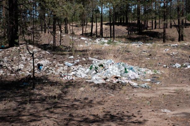 쓰레기 수거장 숲에서 스톡 사진
