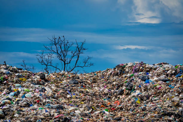 Garbage dump with dead tree stock photo