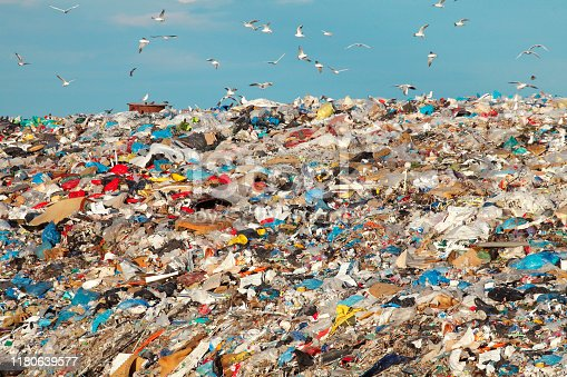 Garbage dump with flock of birds