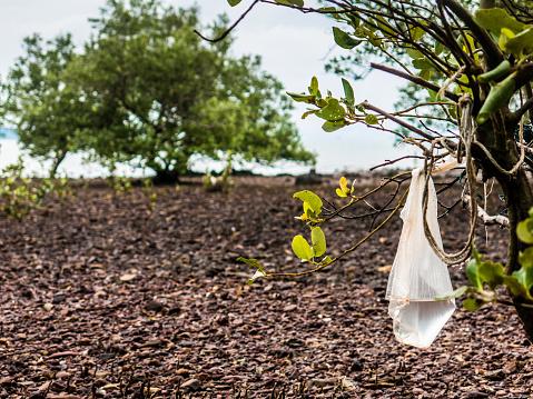 Garbage Problem Tree Tangled Plastic Pollution Environmental Damage