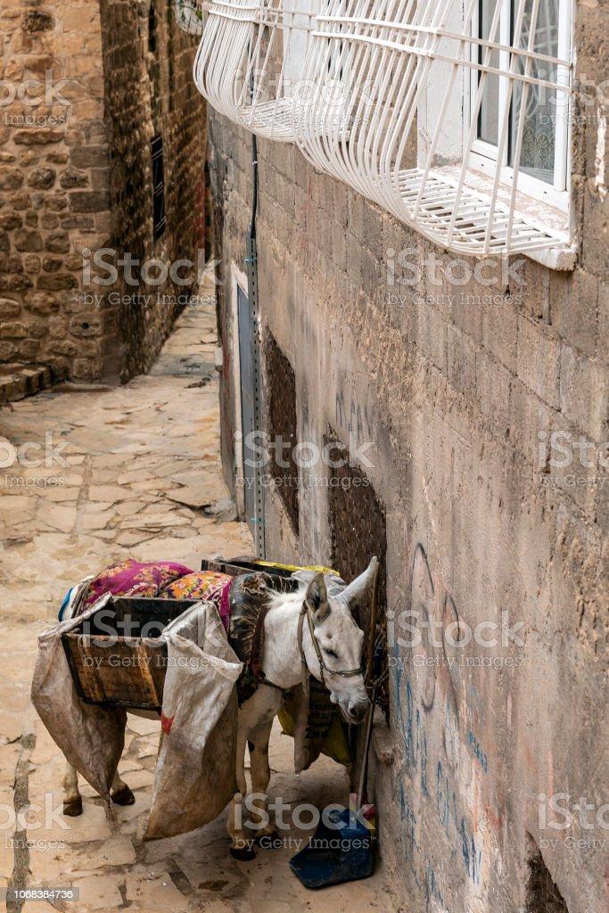 Mardin'in arka sokak eşek ile çöp hizmetinde stok fotoğrafı