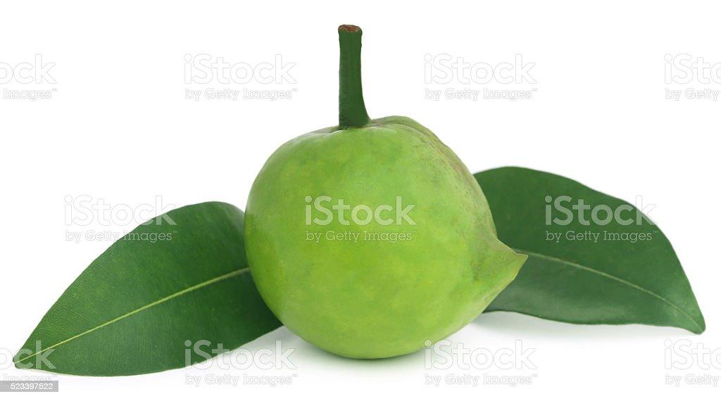 Garcinia tinctoria or edible Daophal of Bangladesh stock photo