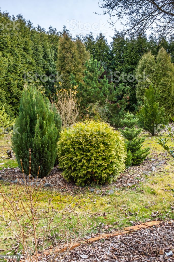 Garden after winter with tress and bushes stock photo