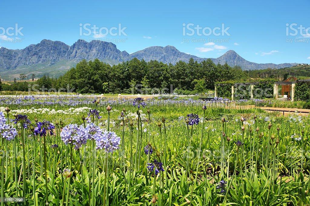 Garden and flowers in Vergelegen stock photo