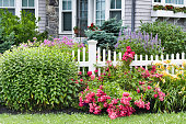 Low angle view of flower garden and greenery in front of white picket fence with New England style house in the background.