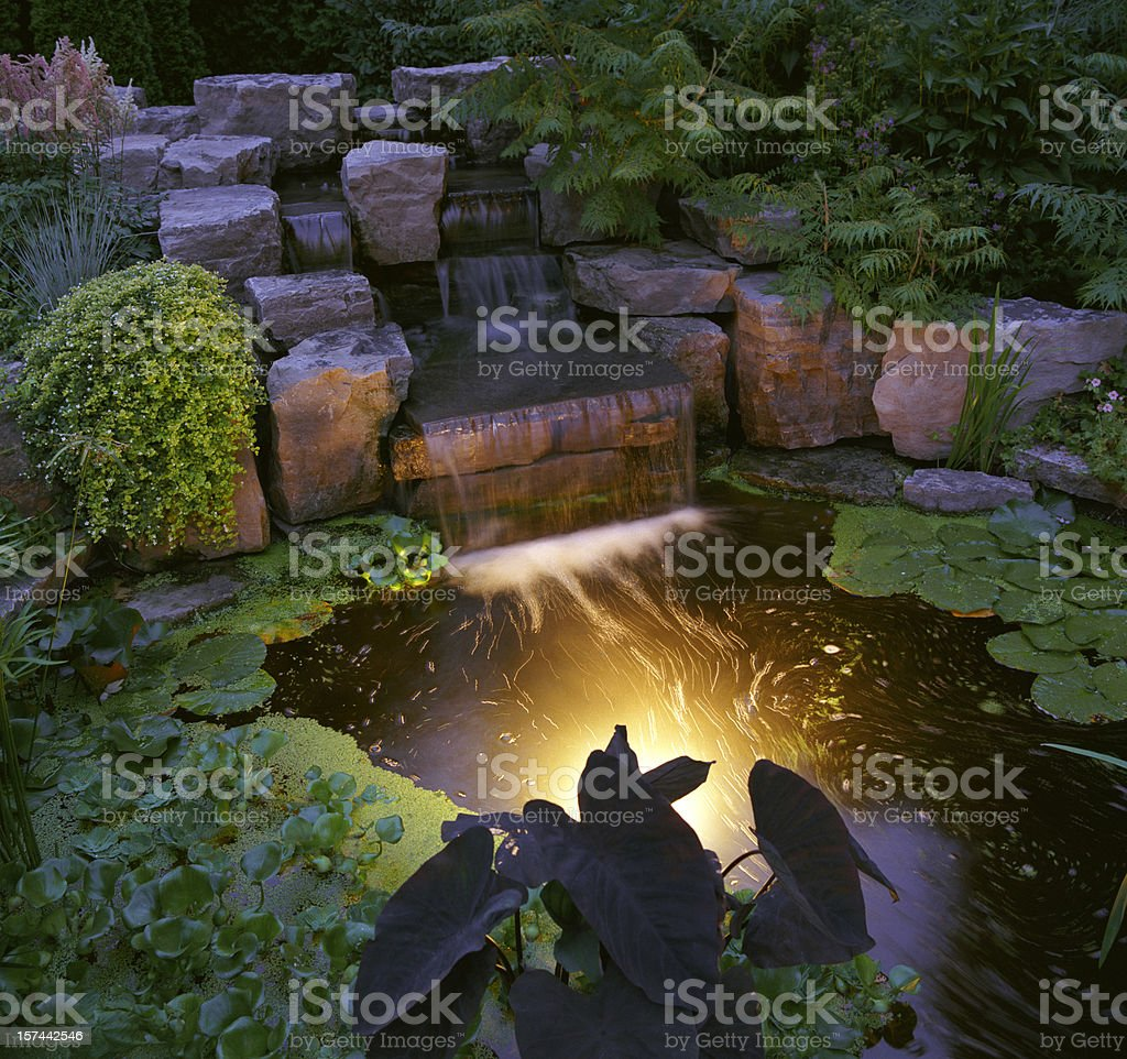 Garten bei Nacht – Foto