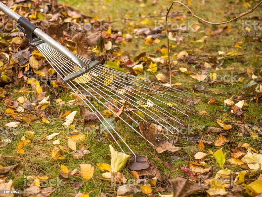 Garden Autumn Works Stock Photo & More Pictures of Arrangement | iStock