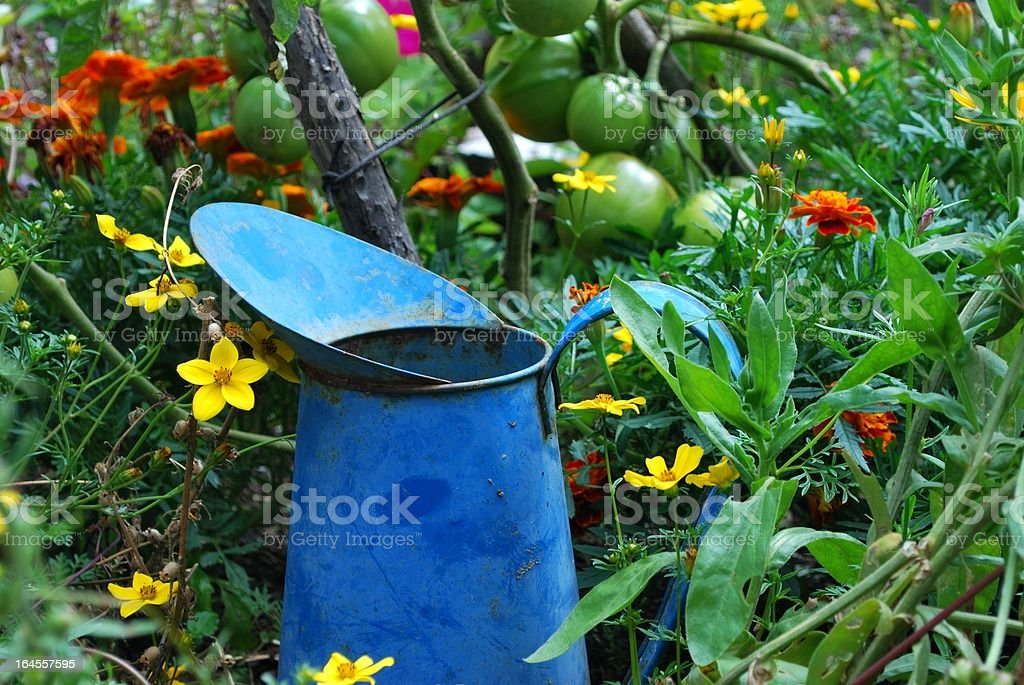 Garden Background with Pitcher royalty-free stock photo