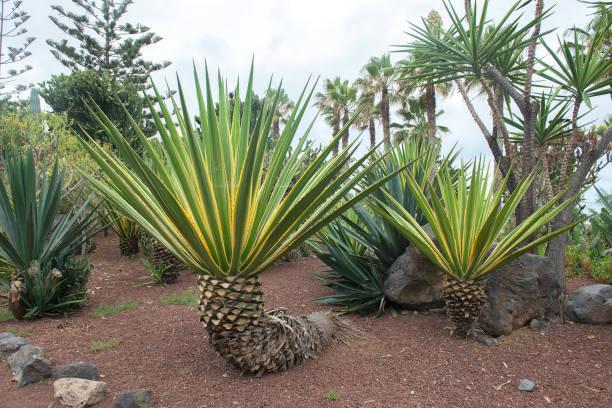 Garden beach, Puerto de la Cruz stock photo