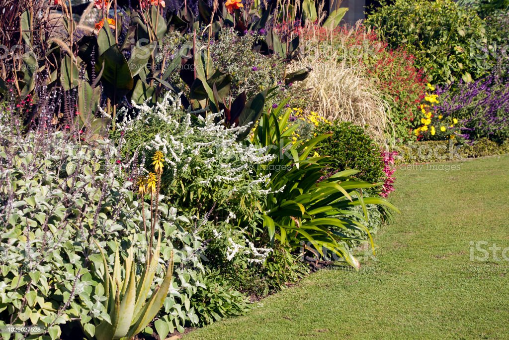 Photo libre de droit de Lits De Jardin Avec Fleurs Dautomne banque d ...