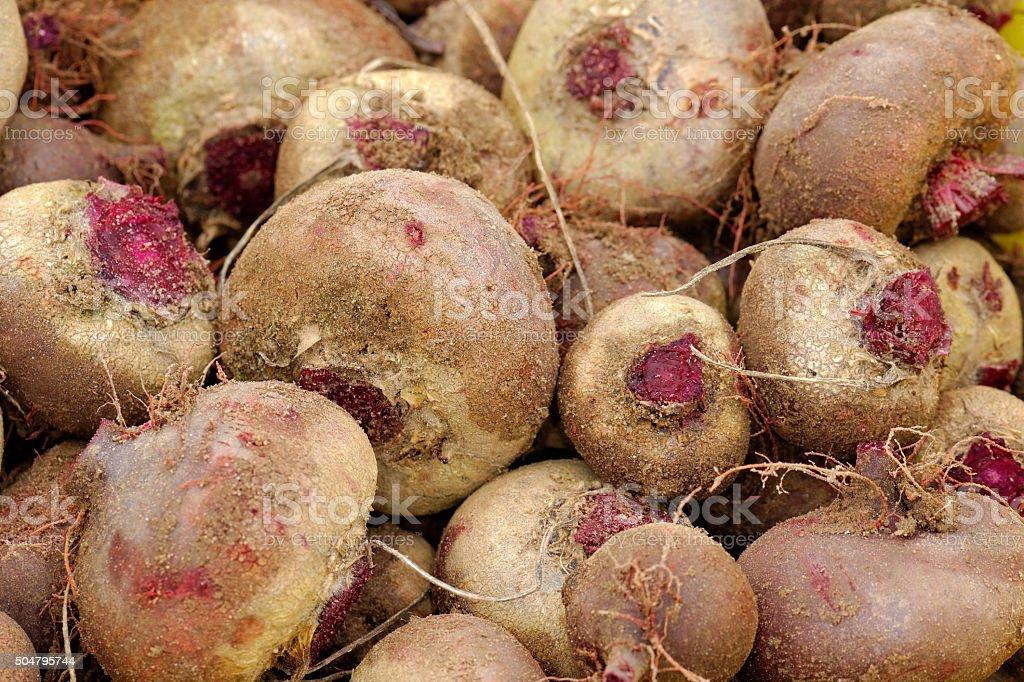 Garden beet stock photo